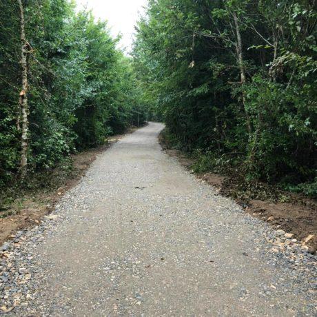 chemin forestier 4
